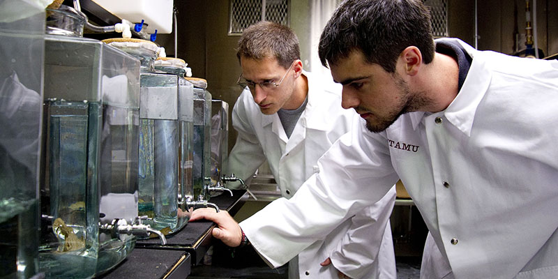 Students in laboratory