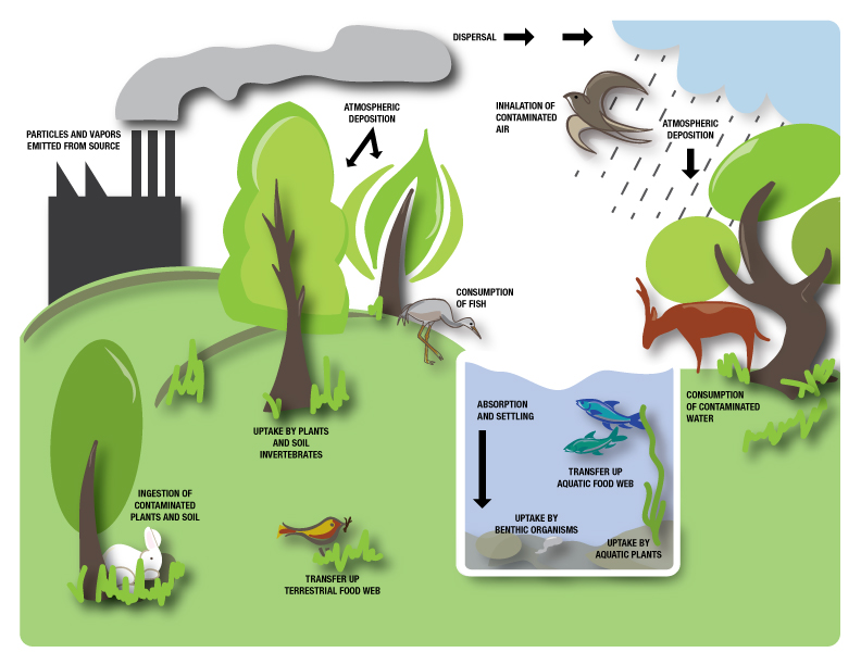 diagram showing movement of air pollutants in environment