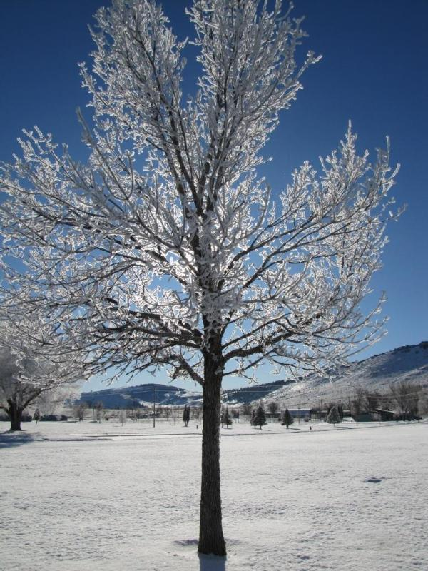 Why Don T Trees Freeze And Burst In The Winter Like Cold