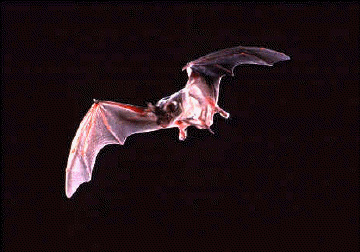 Why are bats blind?   Science Questions with Surprising ...