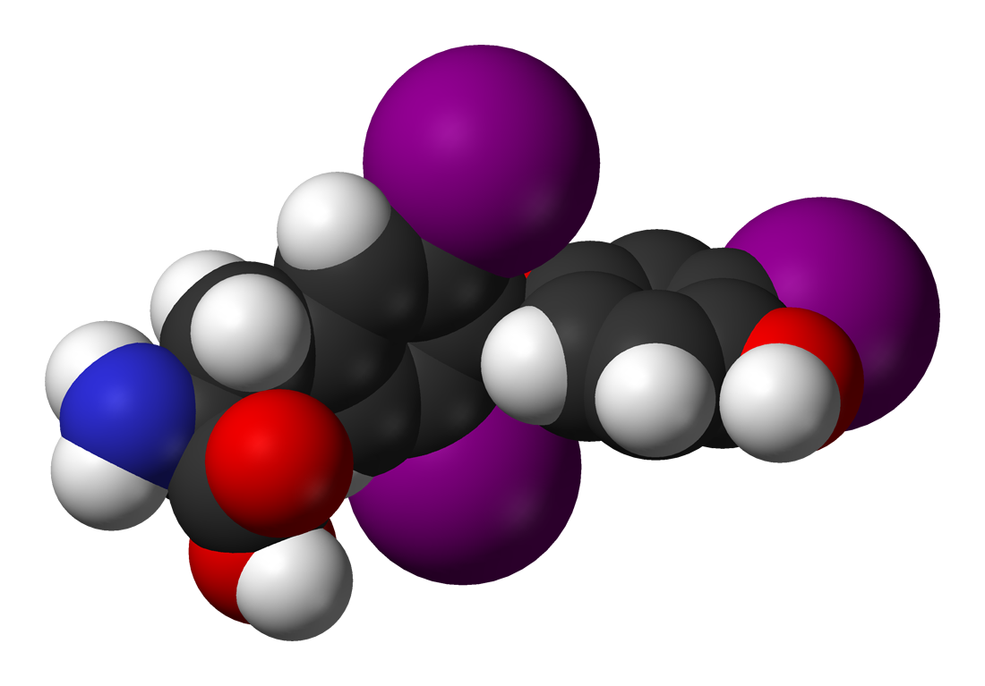 thyroid hormone T3 molecule