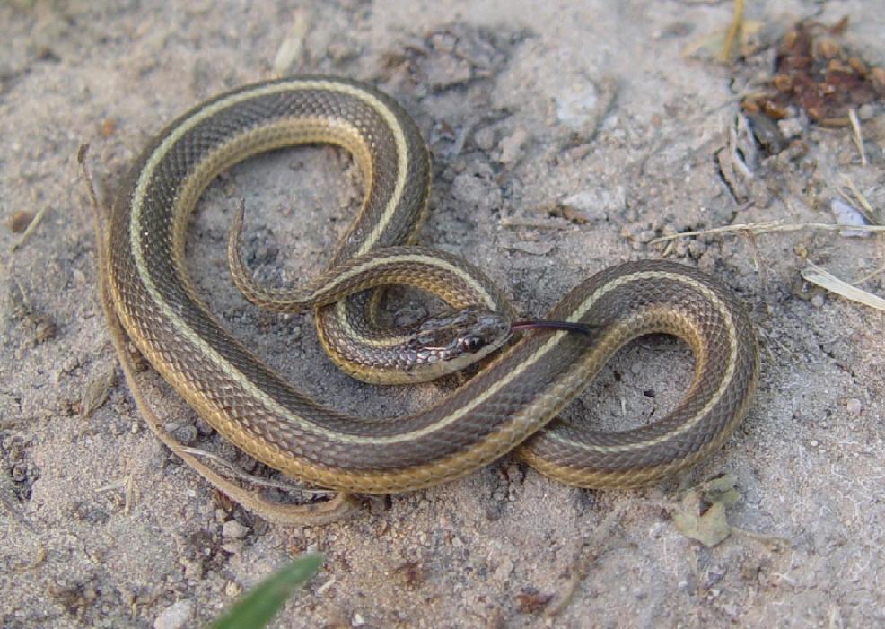 Photo Quiz 3 Snakes